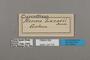 124776 Cymothoe lucasii labels IN