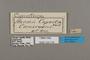 124778 Cymothoe capella labels IN