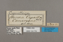 124779 Cymothoe capella labels IN