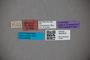 3047619 Stenus artipennis ST labels2 IN
