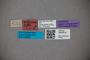 3047619 Stenus artipennis ST labels IN