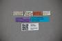 3047620 Stenus asiaticus ST labels IN