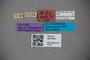 3047621 Stenus asper ST labels2 IN