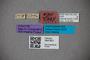 3047621 Stenus asper ST labels IN