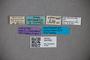 3047622 Stenus asperrimus HT labels IN