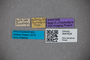 3047624 Stenus auliensis ST labels IN