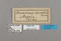 124782 Pseudacraea lucretia labels IN