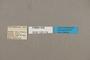 125174 Doxocopa sp labels IN