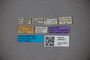 3047627 Omalium cottieri ST labels IN