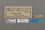 124792 Neptis melicerta labels IN