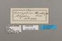 124798 Bebearia mandinga labels IN