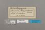 124803 Euriphene ampedusa labels IN