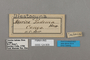 124809 Euriphene tadema labels IN