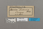 124810 Euriphene tadema labels IN