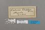 124815 Catuna crithea labels IN