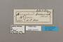 124819 Bebearia barce ssp labels IN
