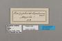 124823 Bebearia carshena labels IN