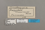 124825 Euriphene camarensis labels IN