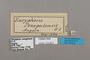 124827 Bebearia senegalensis labels IN