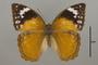 124828 Bebearia senegalensis d IN