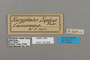 124830 Bebearia sophus labels IN