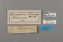 124833 Bebearia comus labels IN