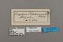 124835 Bebearia tentyris labels IN