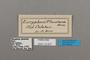 124837 Bebearia phantasia labels IN