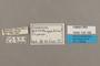 125182 Doxocopa agathina agathina labels IN