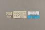 125185 Doxocopa agathina labels IN