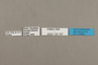 125197 Doxocopa sp labels IN