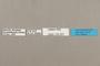 125201 Doxocopa sp labels IN