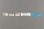 125212 Caligo beltrao labels IN