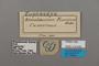 124849 Euphaedra francina labels IN