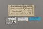 124850 Euphaedra ravola labels IN