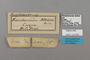124859 Euphaedra medon labels IN