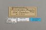 124870 Euphaedra ruspina labels IN