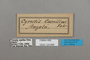 124894 Cyrestis camillus labels IN