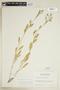 Rorippa palustris subsp. hispida (Desv.) Jonsell, Canada, W. B. Schofield 7010, F