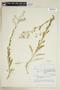 Rorippa palustris subsp. hispida (Desv.) Jonsell, Canada, J. W. Thieret 5457, F