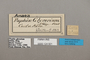 124921 Fountainea glycerium labels IN