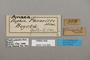 124926 Consul panariste labels IN