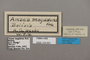 124931 Memphis lineata labels IN