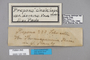 125155 Archaeoprepona chalciope labels IN