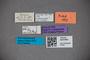 3047654 Stenus bierigi HT labels2 IN
