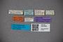 3047659 Stenus bombicinus ST labels IN