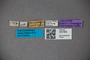 3047660 Stenus bonariensis HT labels IN