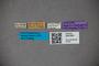 3047661 Stenus borodanus ST labels IN