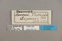 125172 Doxocopa clothilda labels IN