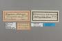 125200 Doxocopa zalmunna PT labels IN